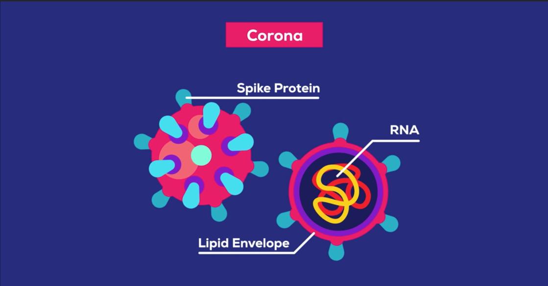 2020-03-30_kurzgesagt-coronavirus-4.25.50PM